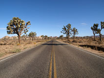 Joshua Tree Highway Stock Photo