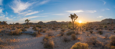 Joshua Tree hiking trail sunrise. The desert landscape in Joshua Tree National Park Stock Image