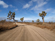 Joshua Tree Lane Stock Photography