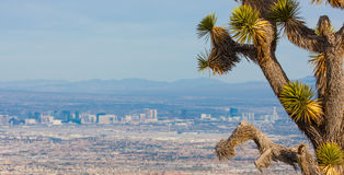 Joshua Tree and the Las Vegas Strip Royalty Free Stock Photo
