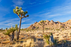 Joshua Tree National Park Stock Photo