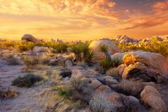 Joshua Tree National Park. Sunset over the rocks and plants of Joshua Tree National Park, Mojave Desert, California Stock Images