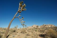 Joshua Tree National Park stock image