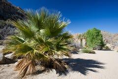 Joshua Tree National Park Foto de Stock Royalty Free