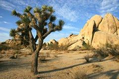 Joshua Tree National Park. A Joshua Tree and rock formation typical of Joshua Tree National Park Stock Photos