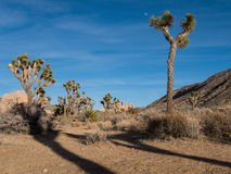 Joshua Tree National Park Foto de archivo