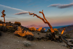 Joshua Tree National Park Immagine Stock Libera da Diritti
