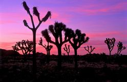 Joshua Tree National Park Stock Photos