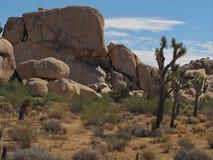 Joshua Tree National Park, Californië Stock Foto