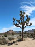 Joshua tree. In  National Park, California Stock Photo
