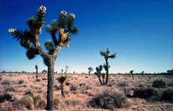 Joshua Tree National Park Stock Images