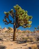 Joshua Tree National Park. California royalty free stock image