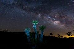 Joshua Tree National Park. In California stock photography