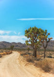 Joshua Tree National Park, California. Single lane dirt road through part stock images