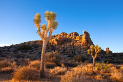 Joshua tree National Park in California USA Royalty Free Stock Photography