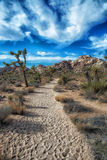 Joshua Tree National Park, California. Walking path in Joshua Tree National Park Stock Photos