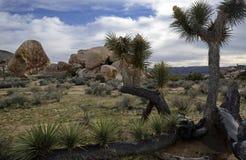 Joshua Tree National Park, Califórnia, EUA Imagens de Stock