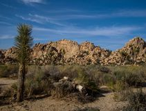 Joshua Tree National Park Desert Lizenzfreie Stockfotografie