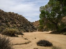 Joshua Tree National Park Desert Lizenzfreie Stockfotos