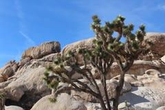 Joshua Tree National Park Desert Landscape Royalty Free Stock Photography