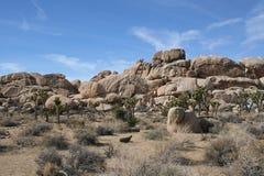 Joshua Tree National Park Desert landskap Arkivbild