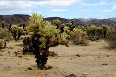 Joshua Tree National Park, desierto de Mojave, California Imagen de archivo