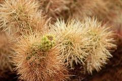 Joshua Tree National Park, desierto de Mojave, California Fotos de archivo