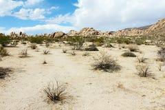 Joshua Tree National Park, desierto de Mojave, California Foto de archivo libre de regalías