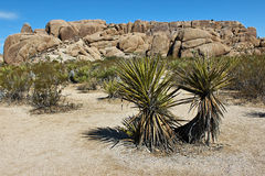 Joshua Tree National Park, desierto de Mojave, California Fotografía de archivo