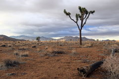 Joshua tree national park. Dry and barren Joshua tree national park Stock Images
