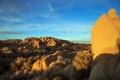 Joshua tree national park. Golden hour at Joshua tree national park, California Royalty Free Stock Photo