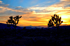 Joshua Tree National Park HDR Photos stock