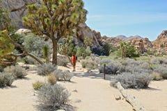Joshua Tree National Park Desert Royalty Free Stock Photography