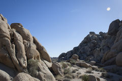 Joshua Tree National Park II Royaltyfri Bild