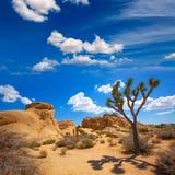 Joshua Tree National Park Jumbo-de valleiwoestijn Califo van de Rotsenyucca Stock Afbeeldingen