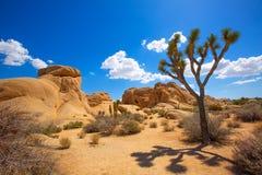 Joshua Tree National Park Jumbo-de valleiwoestijn Califo van de Rotsenyucca Royalty-vrije Stock Fotografie