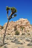 Joshua Tree National Park, Jumbo Rocks Stock Image