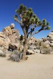 Joshua Tree National Park Kalifornien Royaltyfri Fotografi