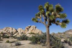 Joshua Tree National Park Kalifornien Arkivfoton