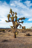 Joshua Tree National Park, Kalifornien Lizenzfreies Stockfoto