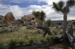 Joshua Tree National Park, la Californie, Etats-Unis Images stock