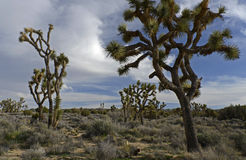 Joshua Tree National Park, la Californie, Etats-Unis Image stock