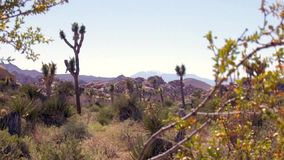 Joshua Tree National Park Landscape stock video