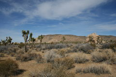 Joshua Tree National Park Landscape Imagem de Stock Royalty Free