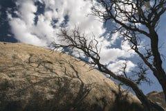 Joshua Tree National Park Landscape Lizenzfreies Stockbild