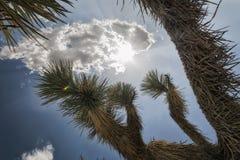 Joshua Tree National Park Landscape Lizenzfreie Stockfotografie