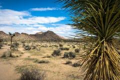 Joshua Tree National Park. Landscape Stock Photos