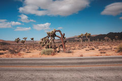 Joshua Tree National Park. The landscape of Joshua Tree Park in California royalty free stock images