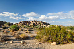 Joshua Tree National Park. Landscape with Yucca Palm in Joshua Tree National Park Stock Image
