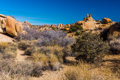 Joshua Tree National Park Lanscape Fotografia Stock Libera da Diritti